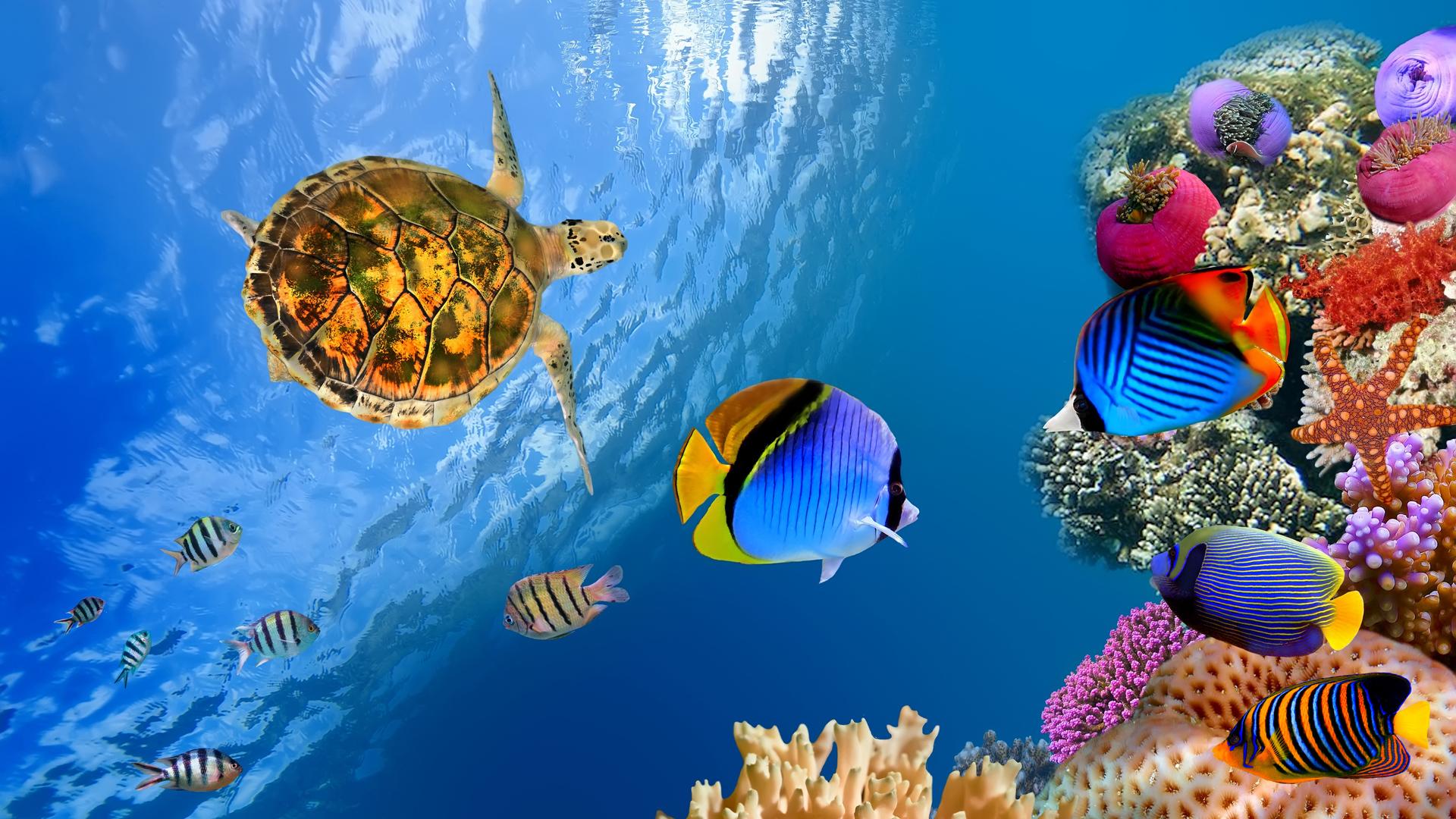 Underwater landscape 4K Ultra HD wallpaper 4k WallpaperNet 1920x1080