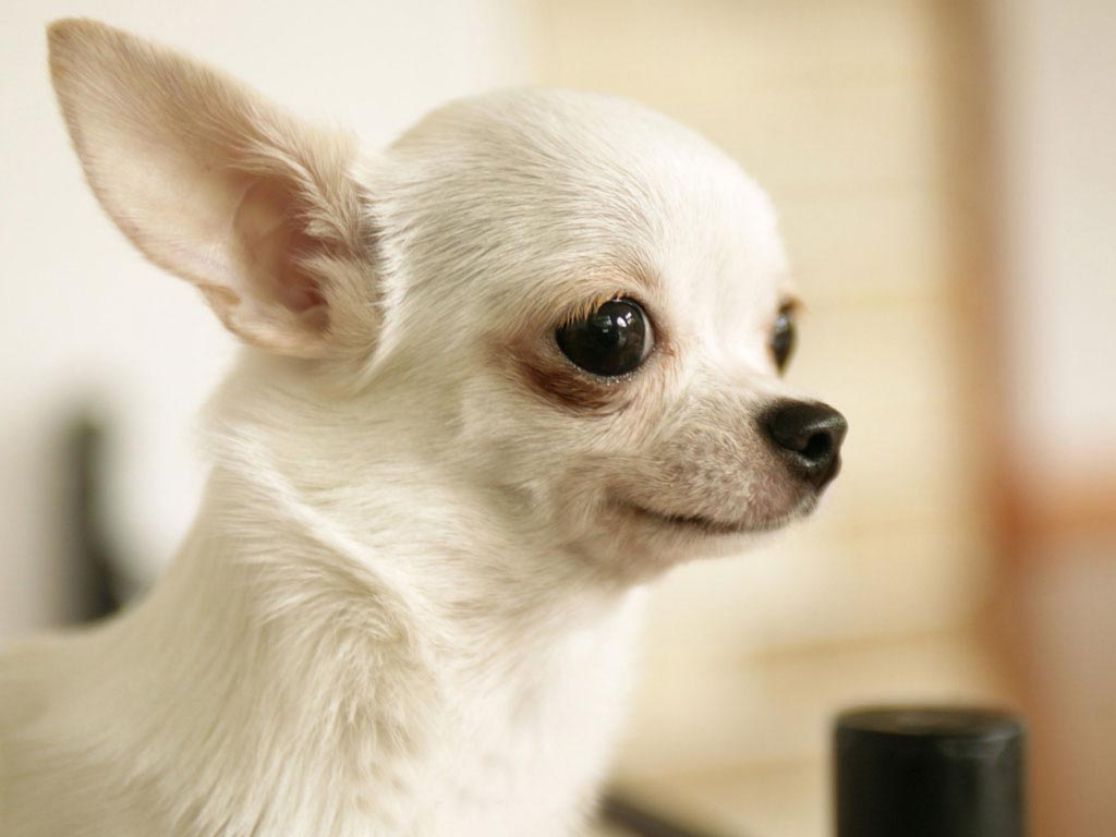 46 Cute Puppies And Dogs Wallpaper On Wallpapersafari