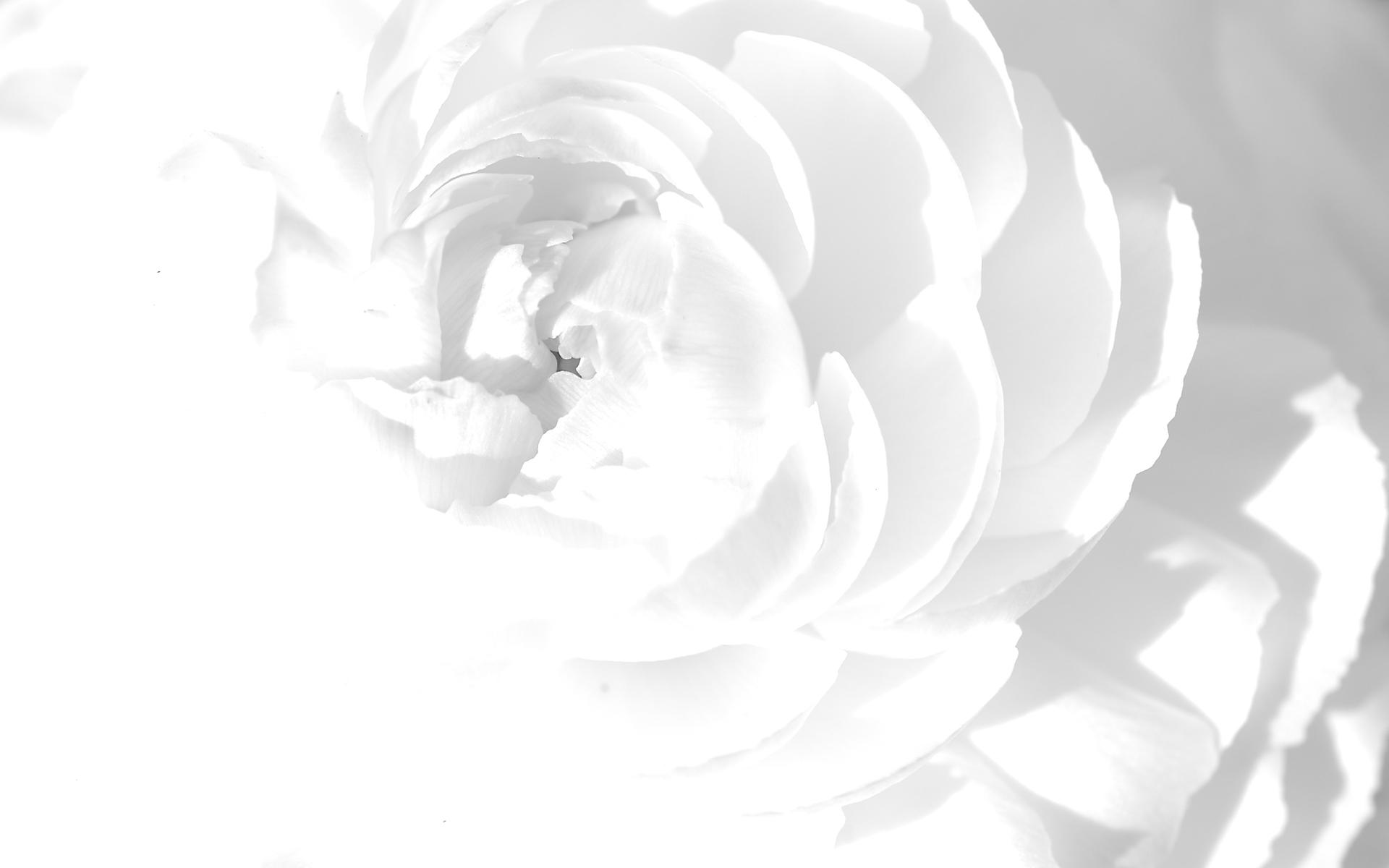 White Wallpaper 9 1920x1200