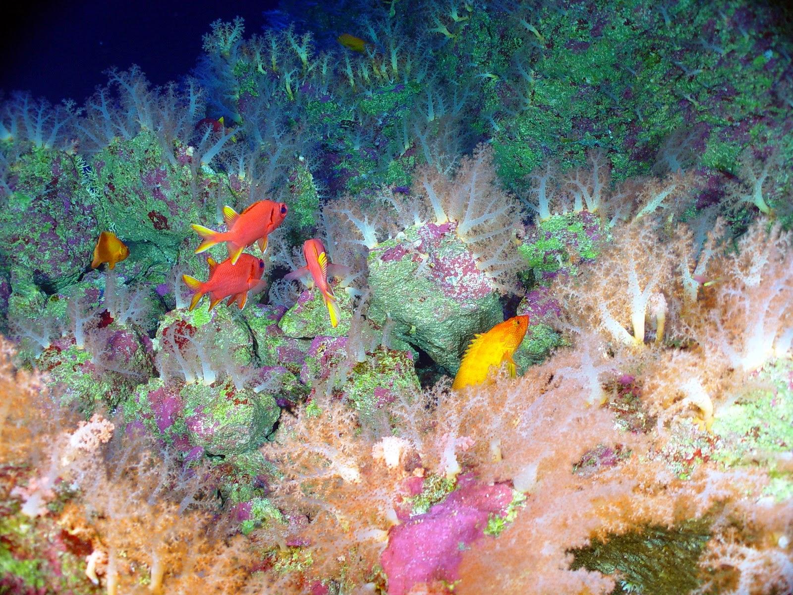 Great barrier reef wallpaper wallpapersafari - Great barrier reef desktop background ...