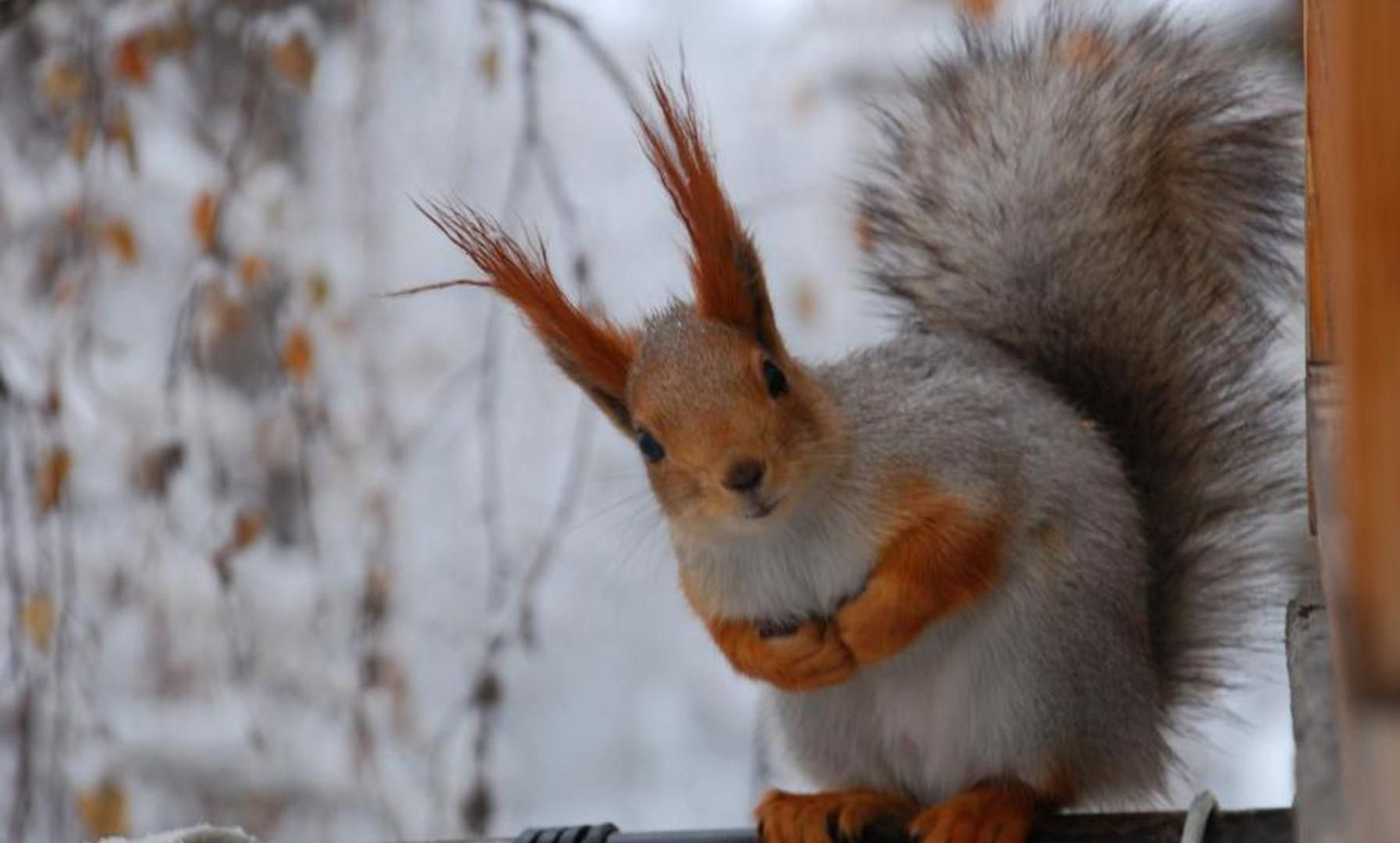 45 squirrel wallpaper themes on wallpapersafari - Funny squirrel backgrounds ...