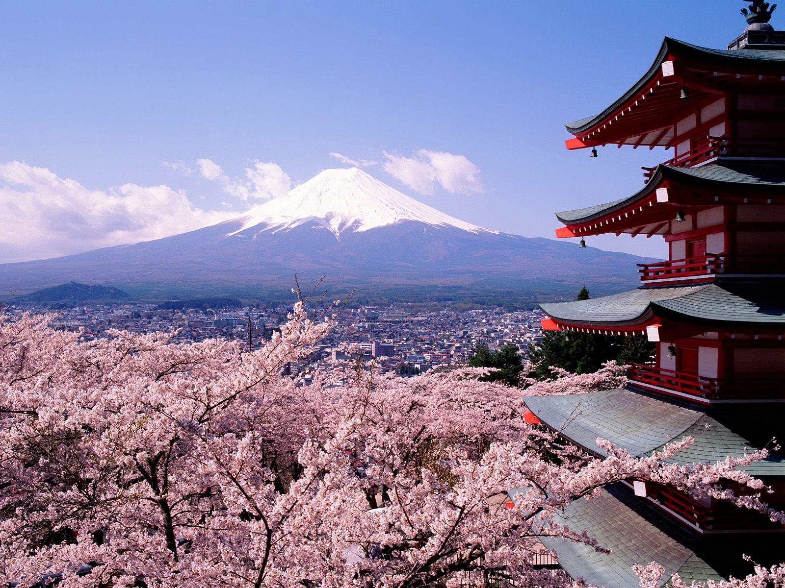 japanese cherry blossoms wallpaper   wallpapersafari