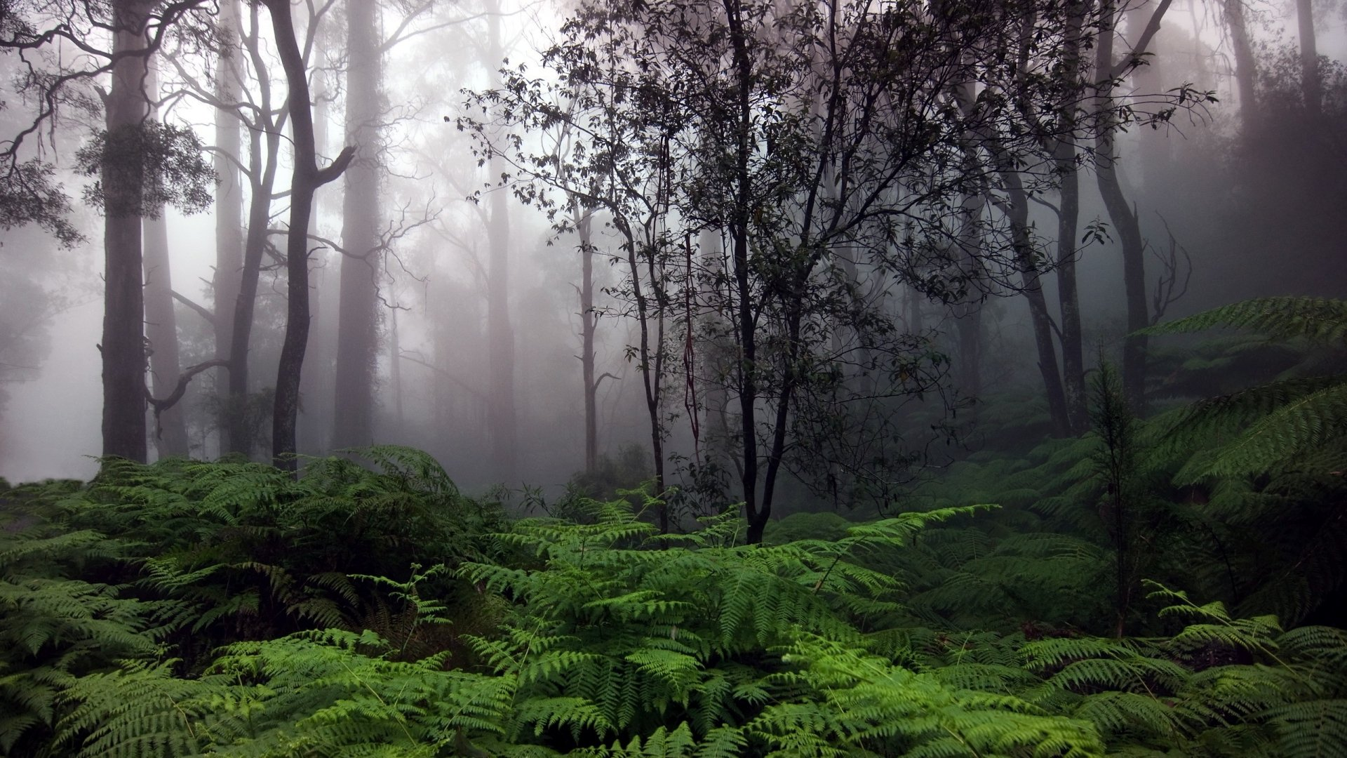 Free Download Rainforest Hd Wallpaper 1920x1080 For Your