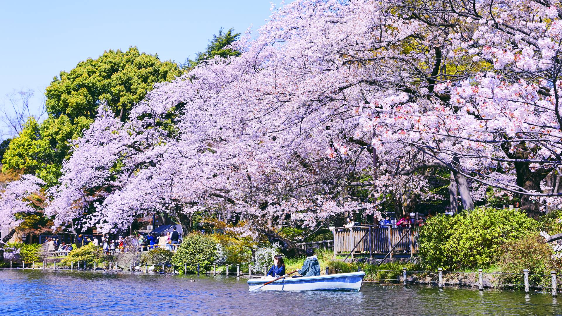 Must See in April in Tokyo The Official Tokyo Travel Guide GO TOKYO 1920x1080