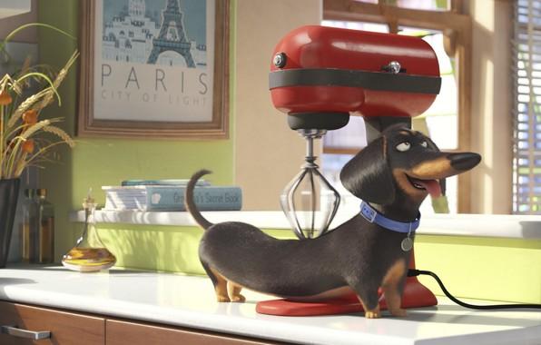 The secret life of pets dachshund film cinema movie 2016 comedy 596x380