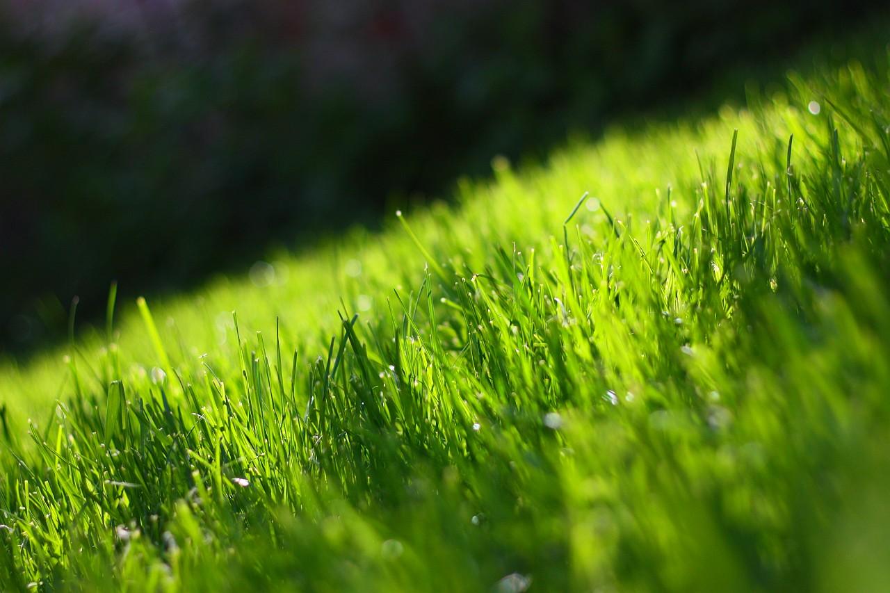 beautiful green grass wallpapers - photo #10