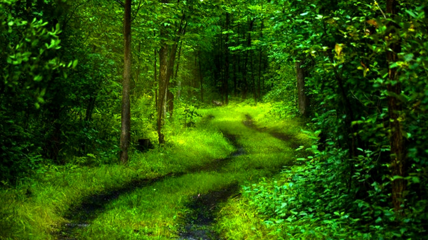 path of nature wallpaper 1366x768