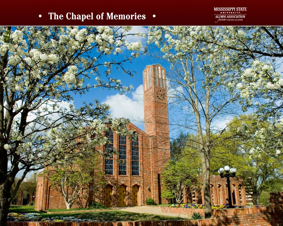 Mississippi State University Development and Alumni   Wallpapers 960x768