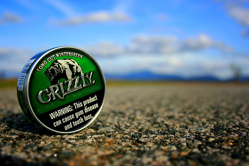 Grizzly Wintergreen Wallpaper Picture Pictures 500x334
