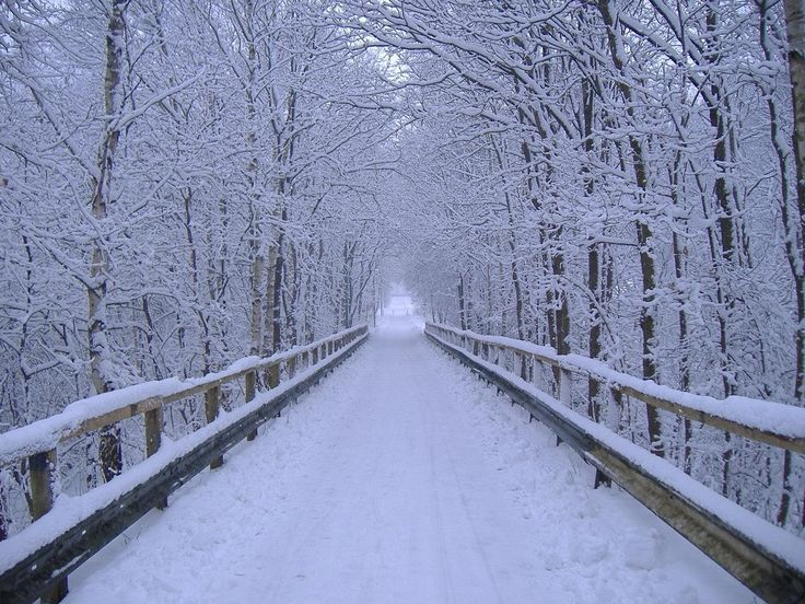 winter scenes 736x552