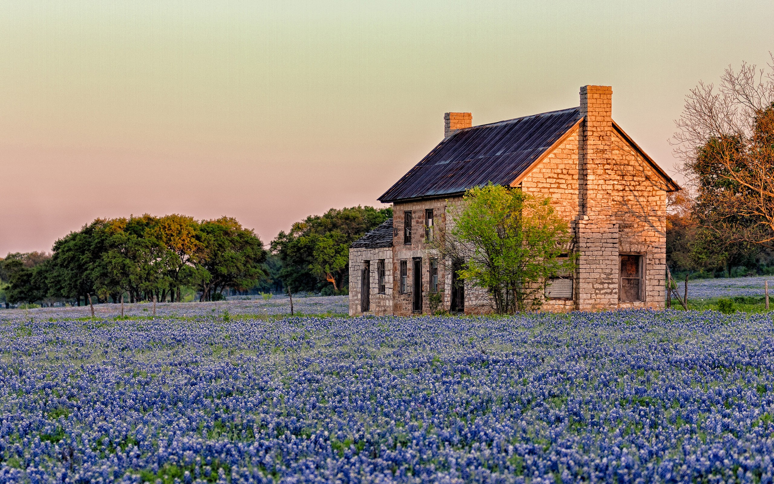 Texas sunlight blue flowers Bluebonnet hd wallpaper background   HD 2560x1600