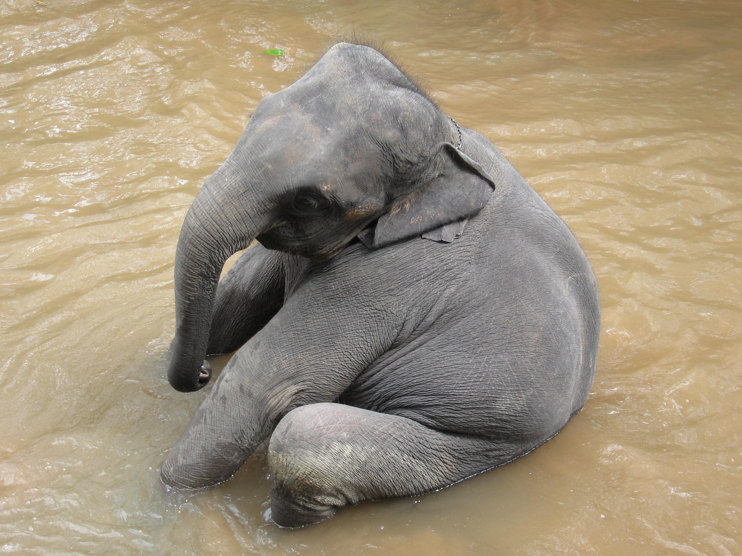 baby elephant A Cute A Day 2592x1944
