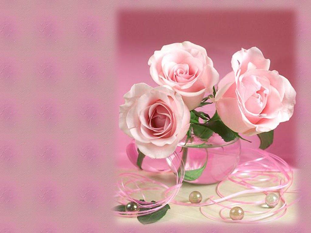 purple roses wallpaper desktop background