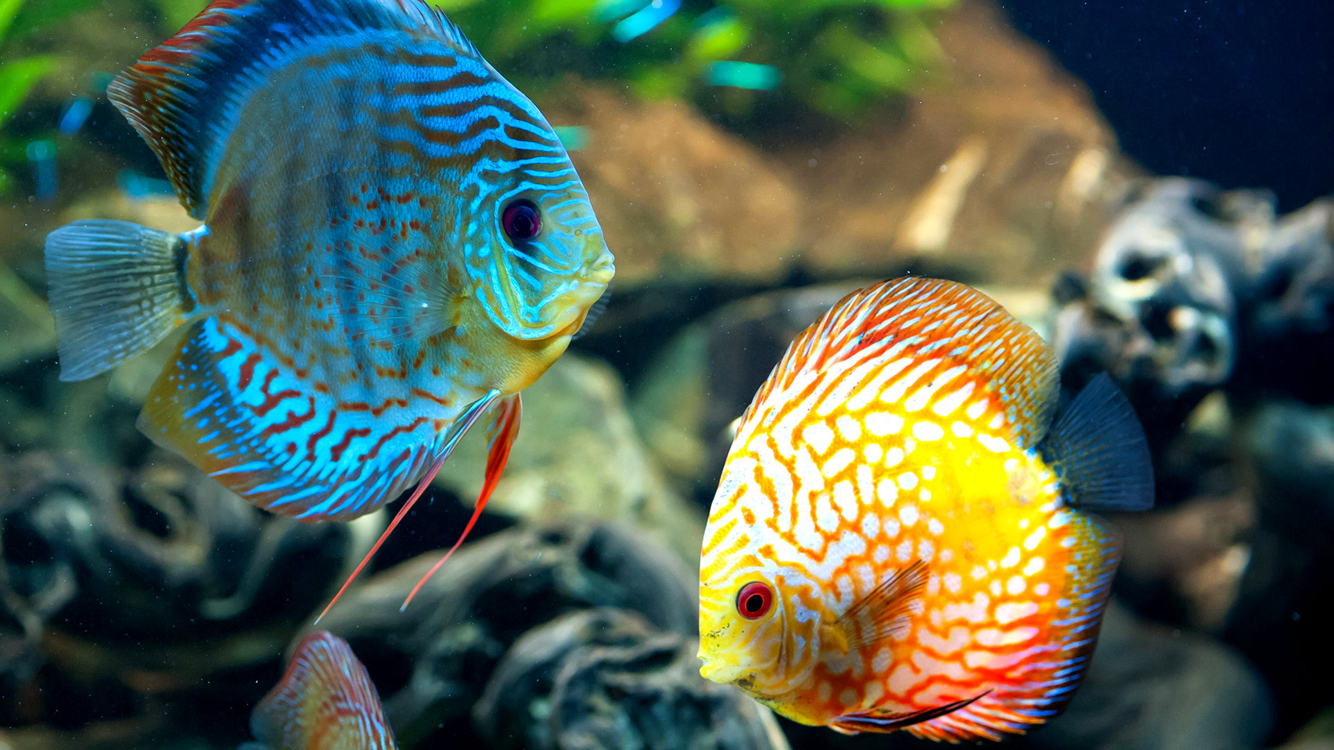 Download Fish HD Wallpapers for your Desktop Tablet Mac Laptop 1920x1080