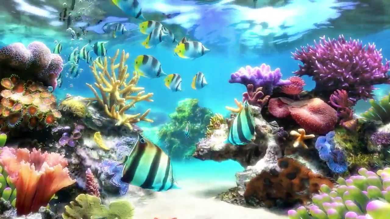Sim Aquarium   Screensaver Live Wallpaper 1280x720