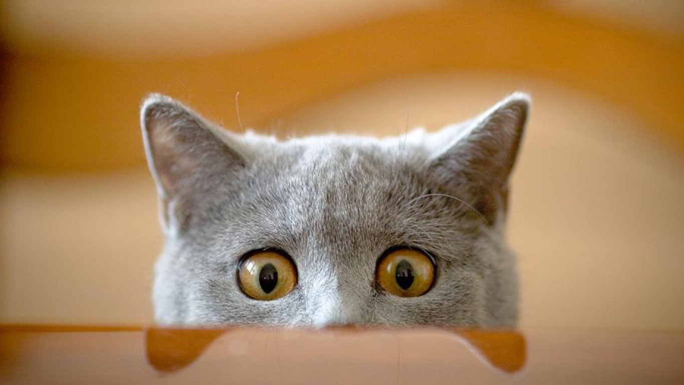 Cute Big Eye Cat Wallpaper Wallpaper WallpaperLepi 1366x768