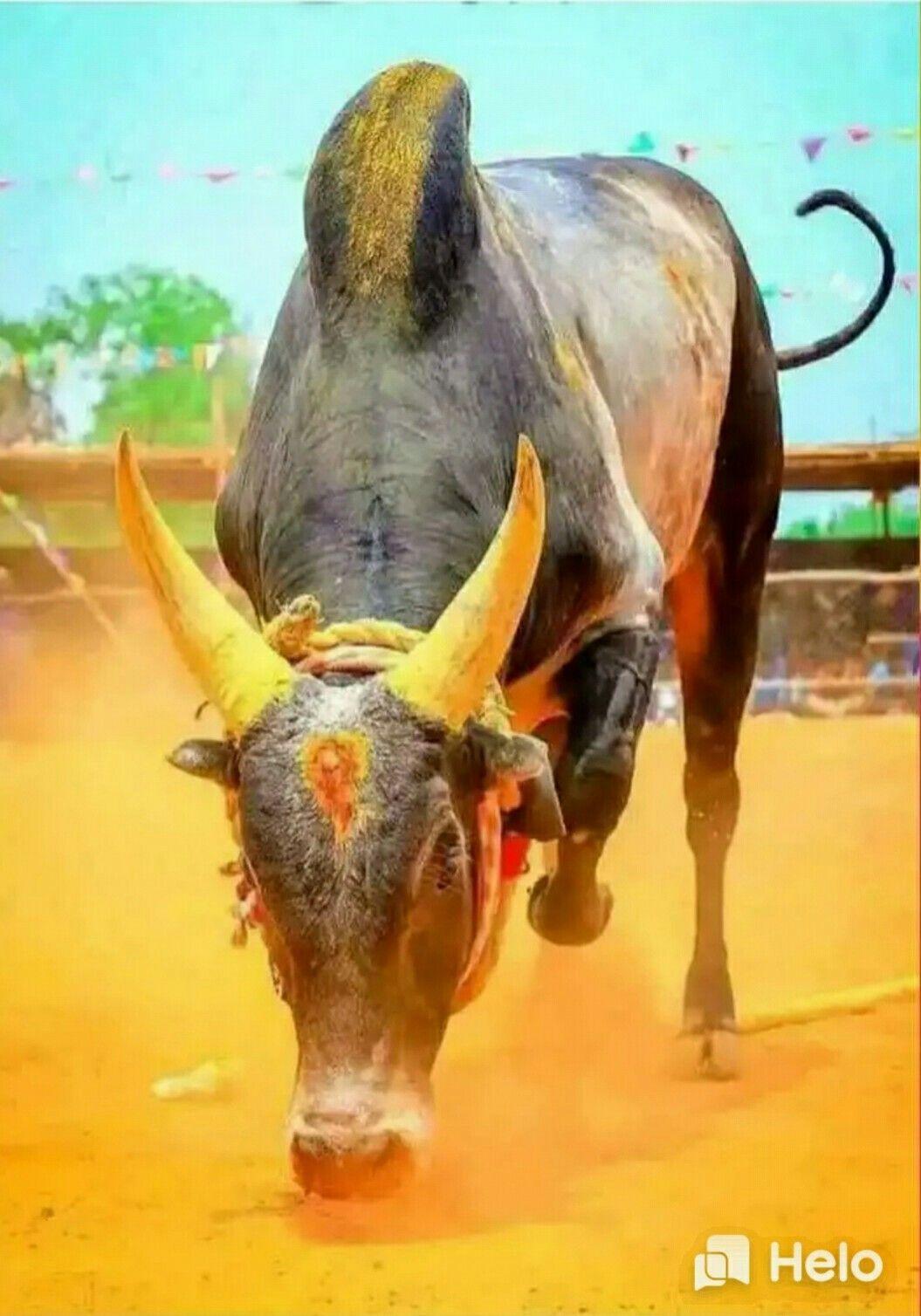 Bull painting image by Aman Kr Saini 1055x1508