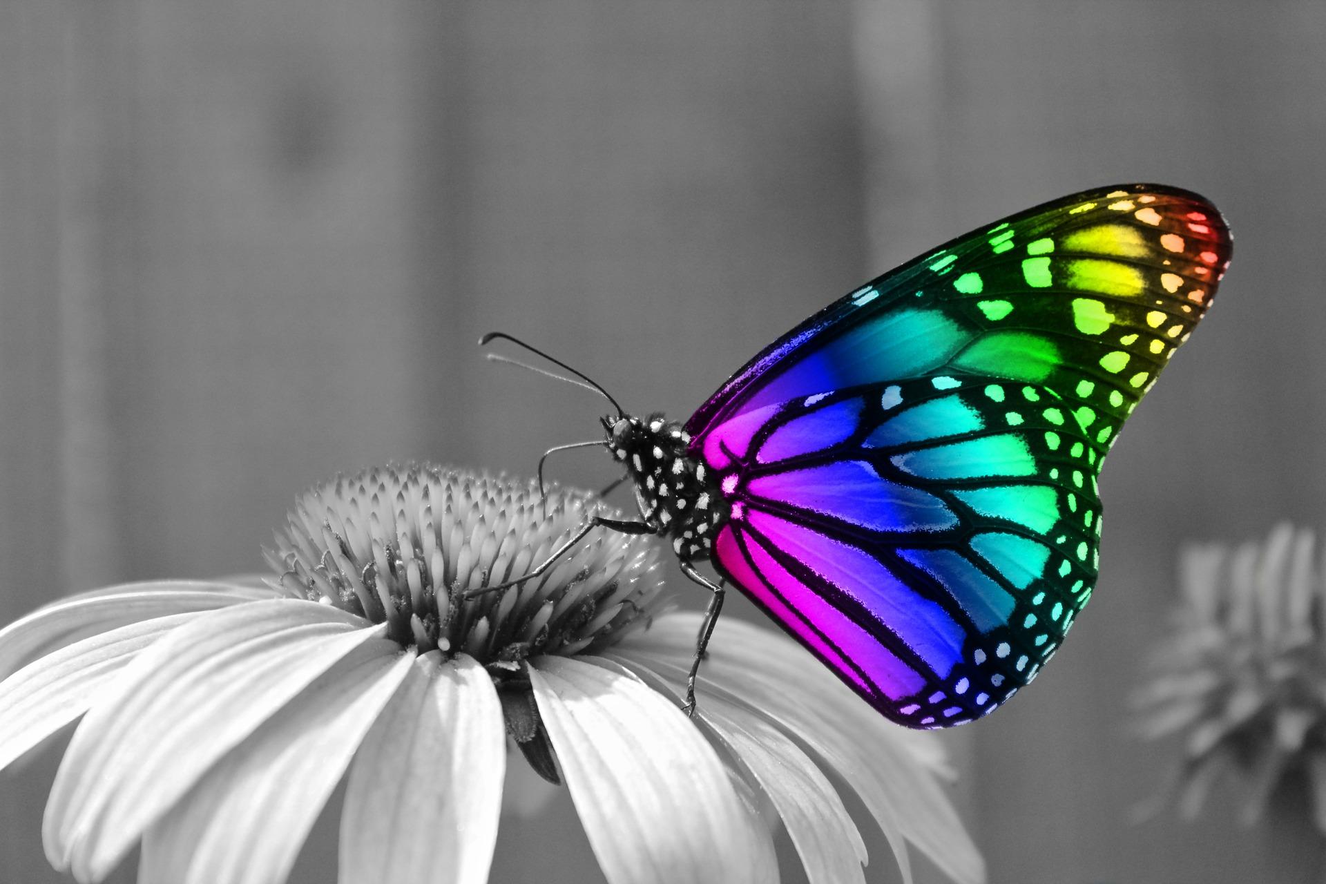 Butterfly Desktop Wallpapers 1920x1280