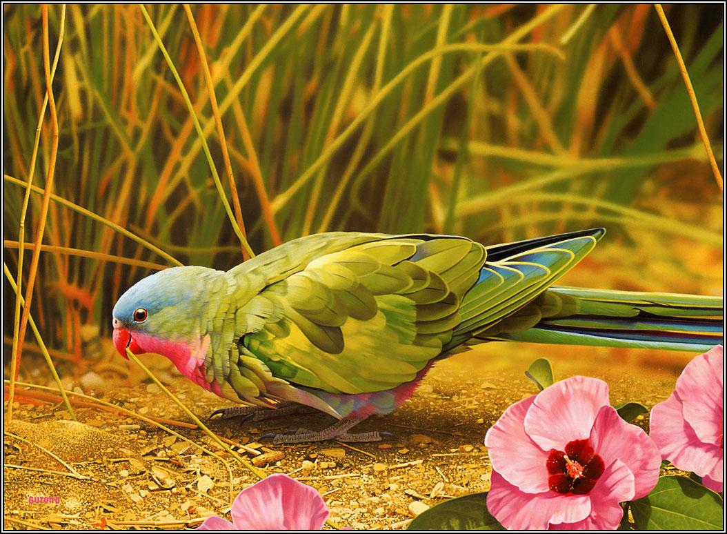 15 Beautiful Birds Latest Hd Wallpapers 2013 Beautiful And Dangerous 1054x774