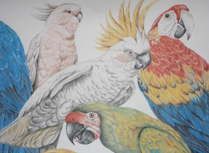 Vintage Parrots Bird Wallpaper Wallpaper Borders Cockatoo Wallpaper 736x539