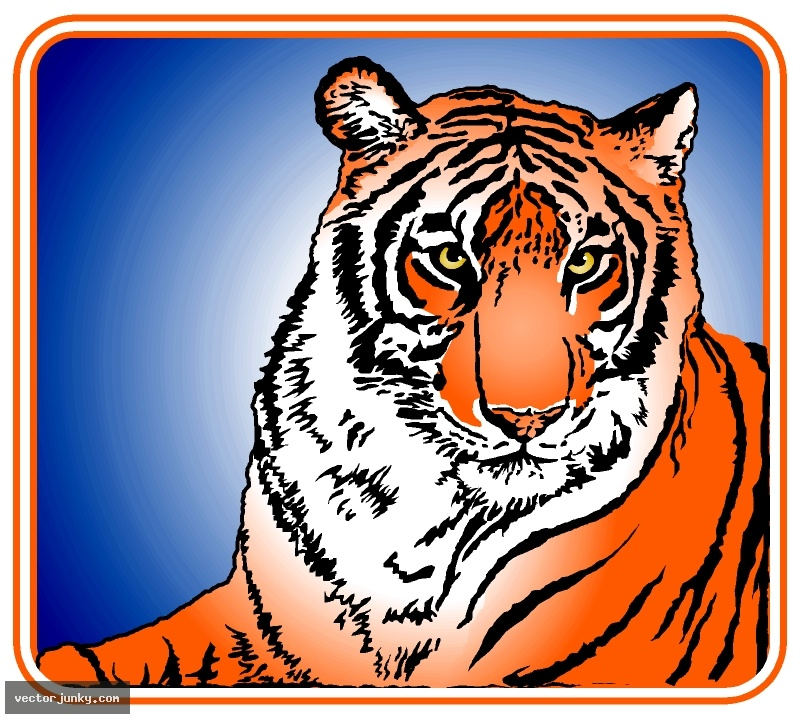 Cartoon Tigers Pictures Of Tiger 800x719