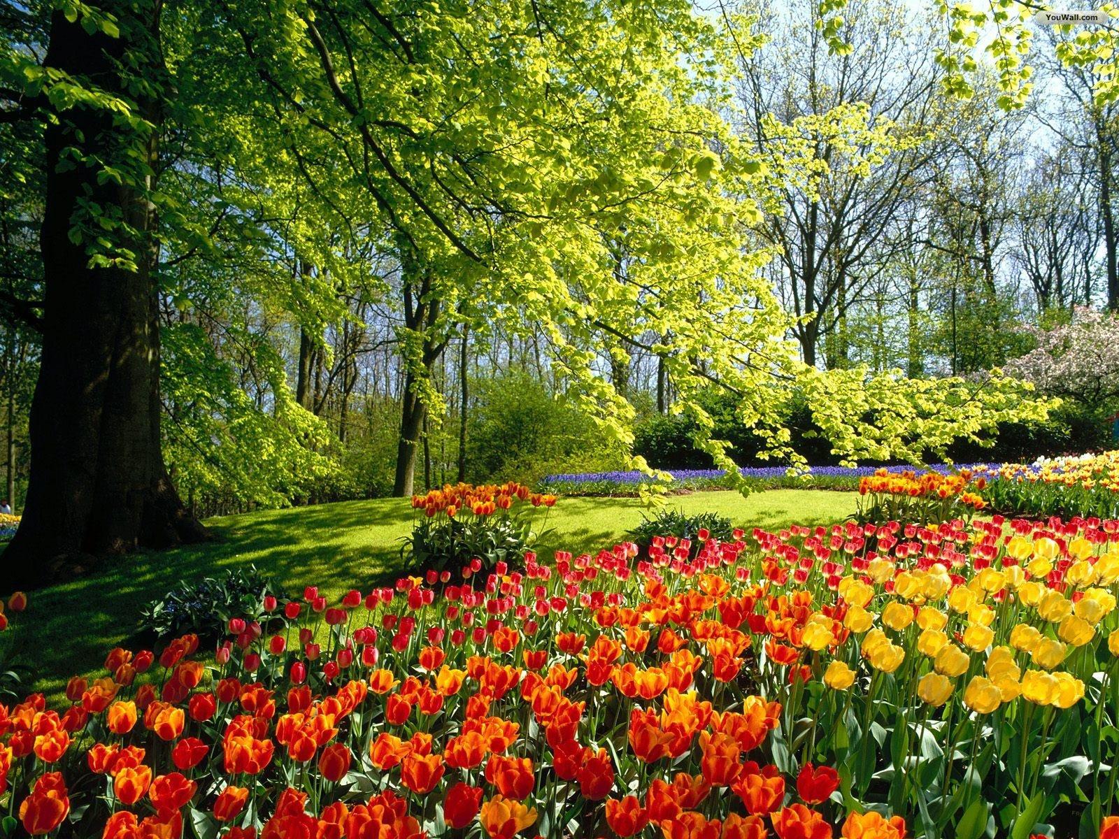 SUN SHINES Beautiful Flower Garden Wallpapers 1600x1200