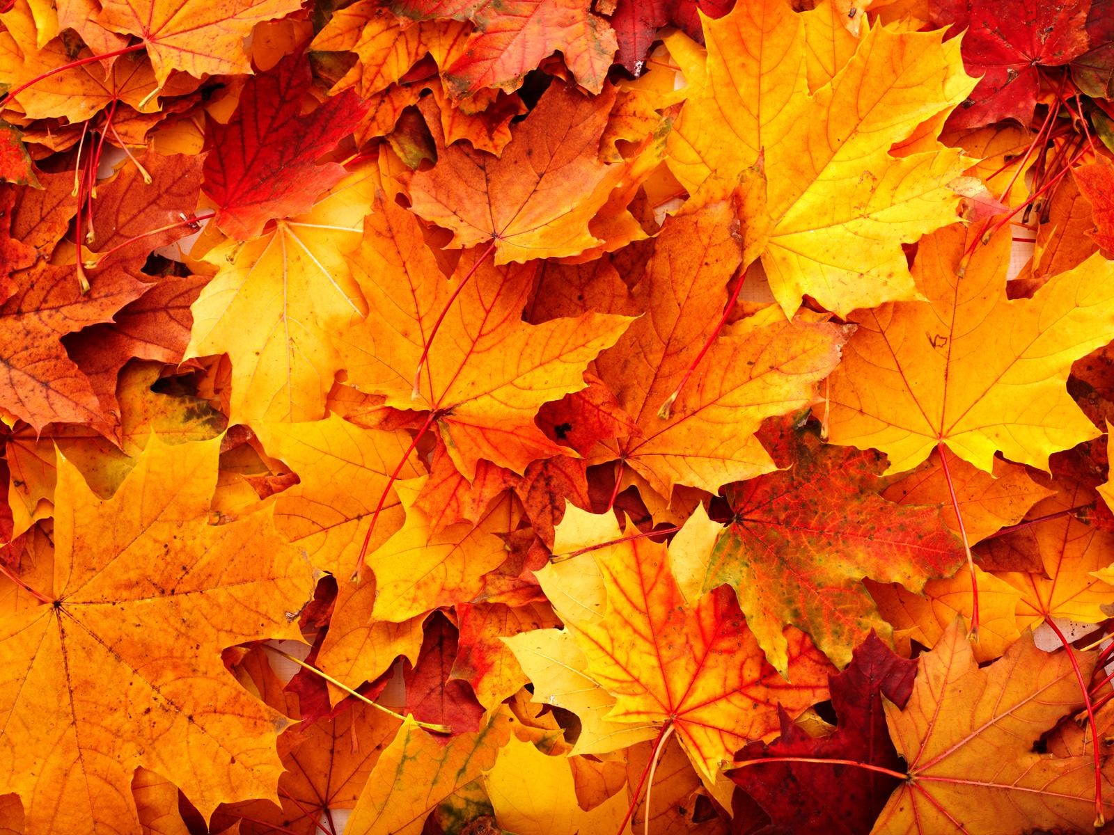 Autumn Leaves Tumblr Delicious autumn 1600x1200
