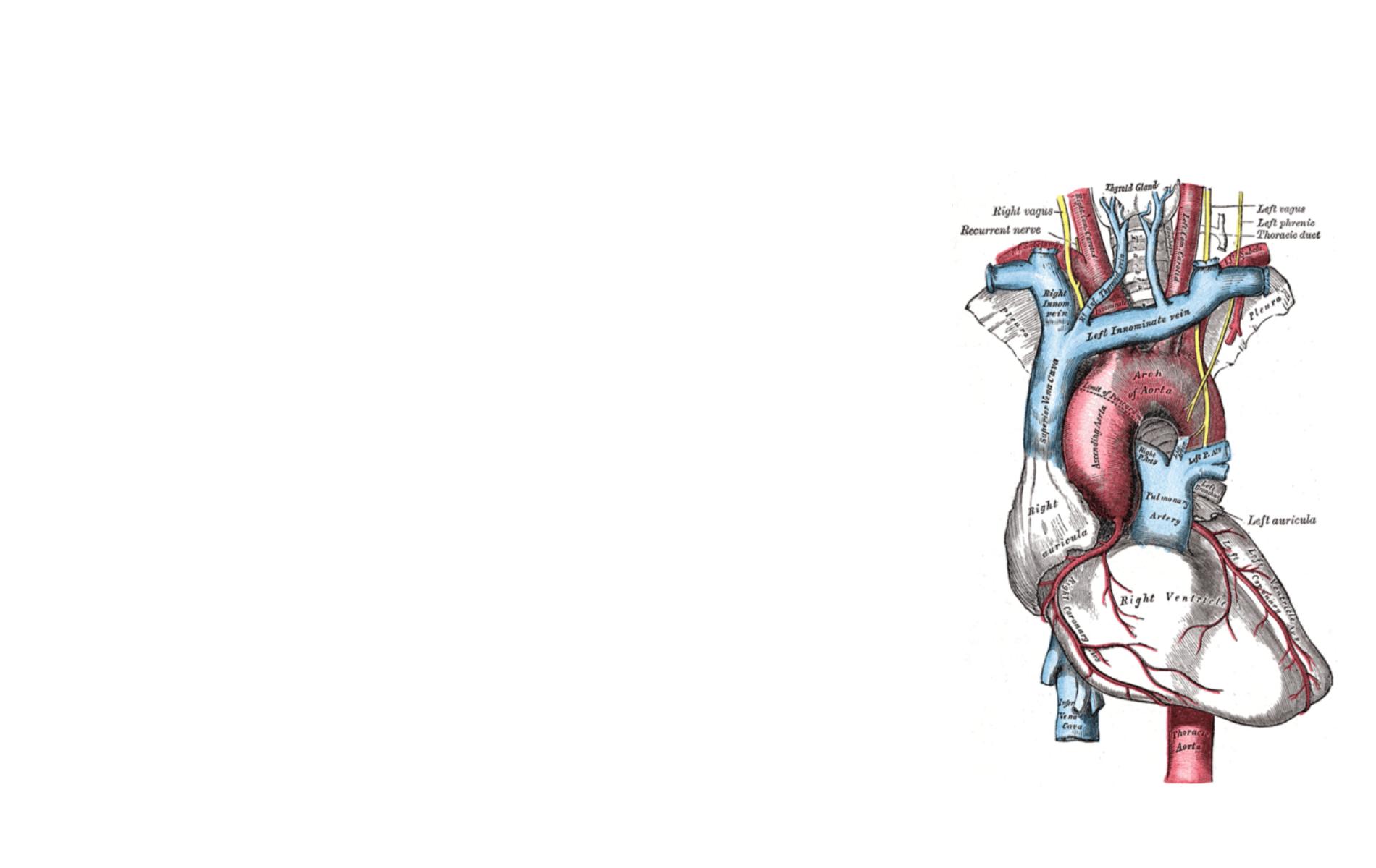 anatomy wallpaper background - photo #23