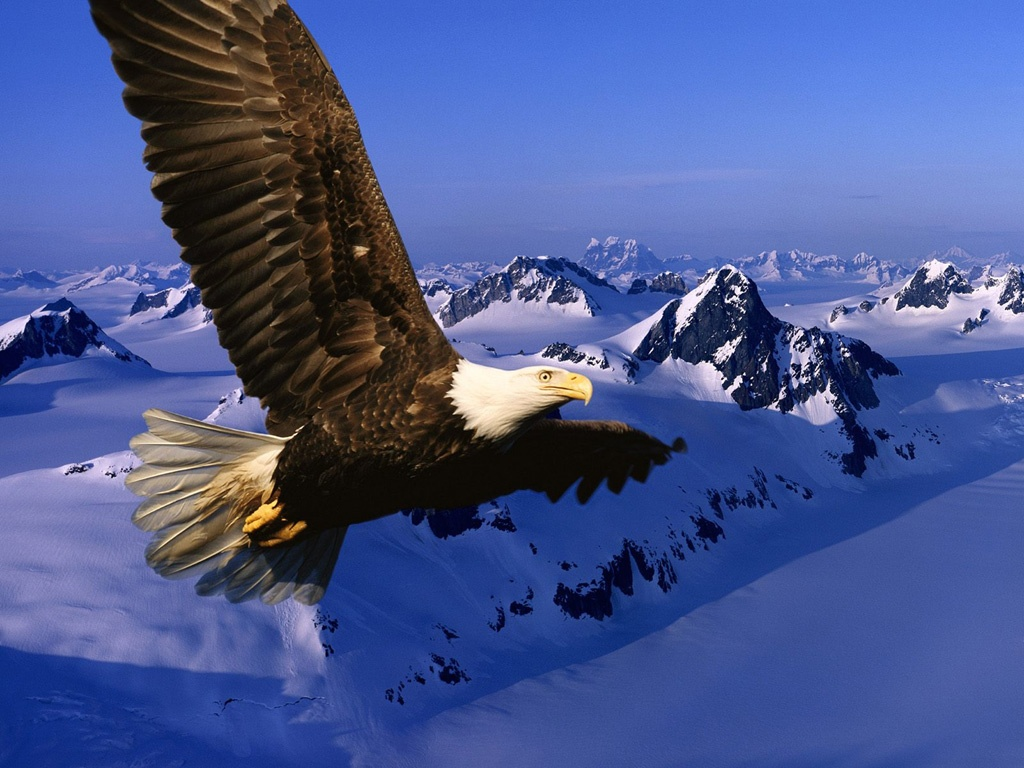 Eagle desktop wallpaper 1024x768