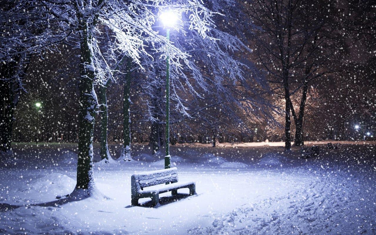 Amazing Winter Night Frozen Tree In Hd Wallpaper 1280x800