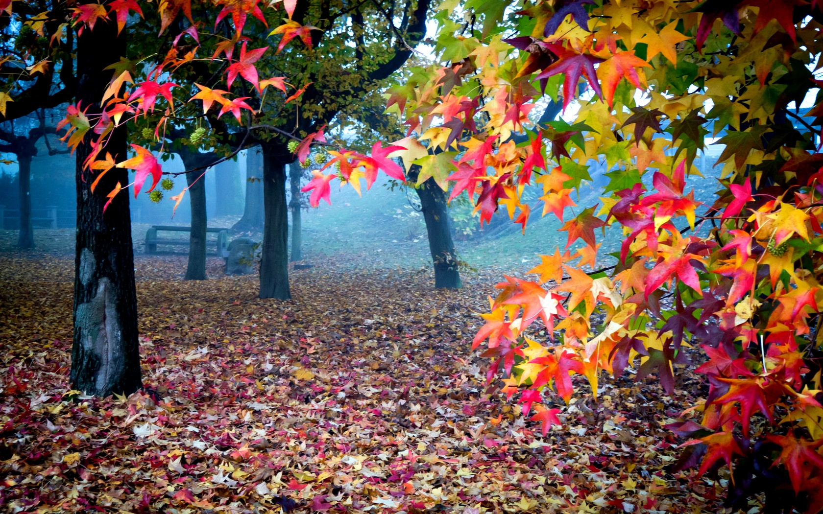 Beautiful Autumn Colors Wallpapers - 1680x1050 - 1042106