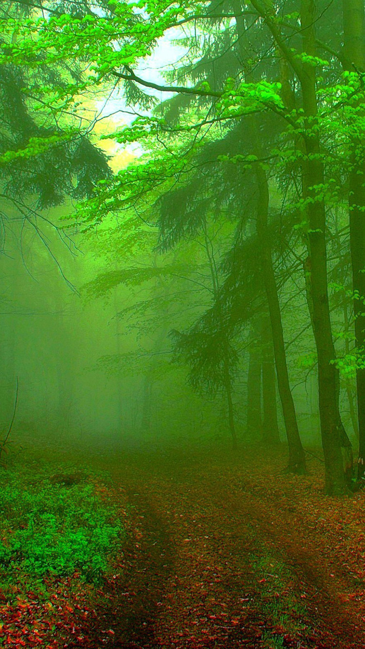 Free Download Green Forest Road Iphone 6 Wallpaper Hd Iphone 6