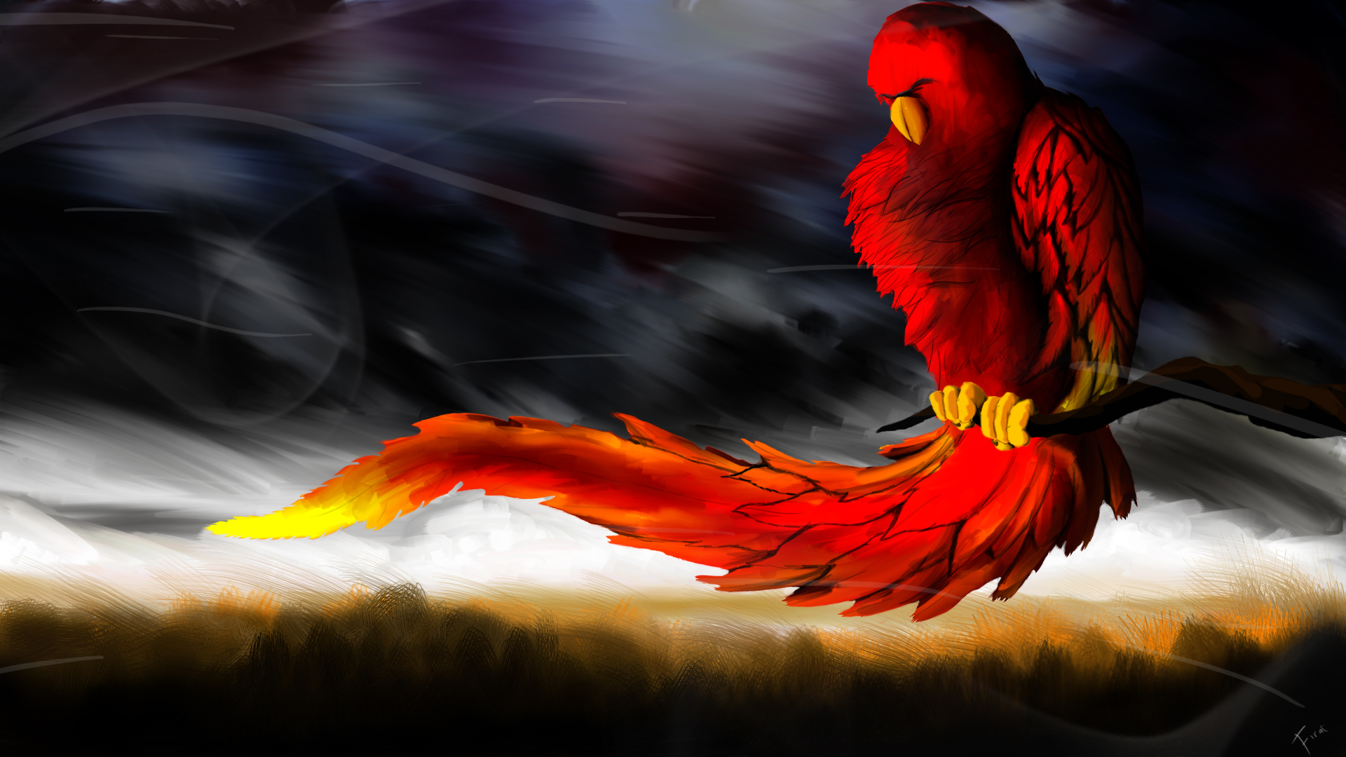 3d parrot cool wallpapers hd desktop backgroundjpg 1920x1080