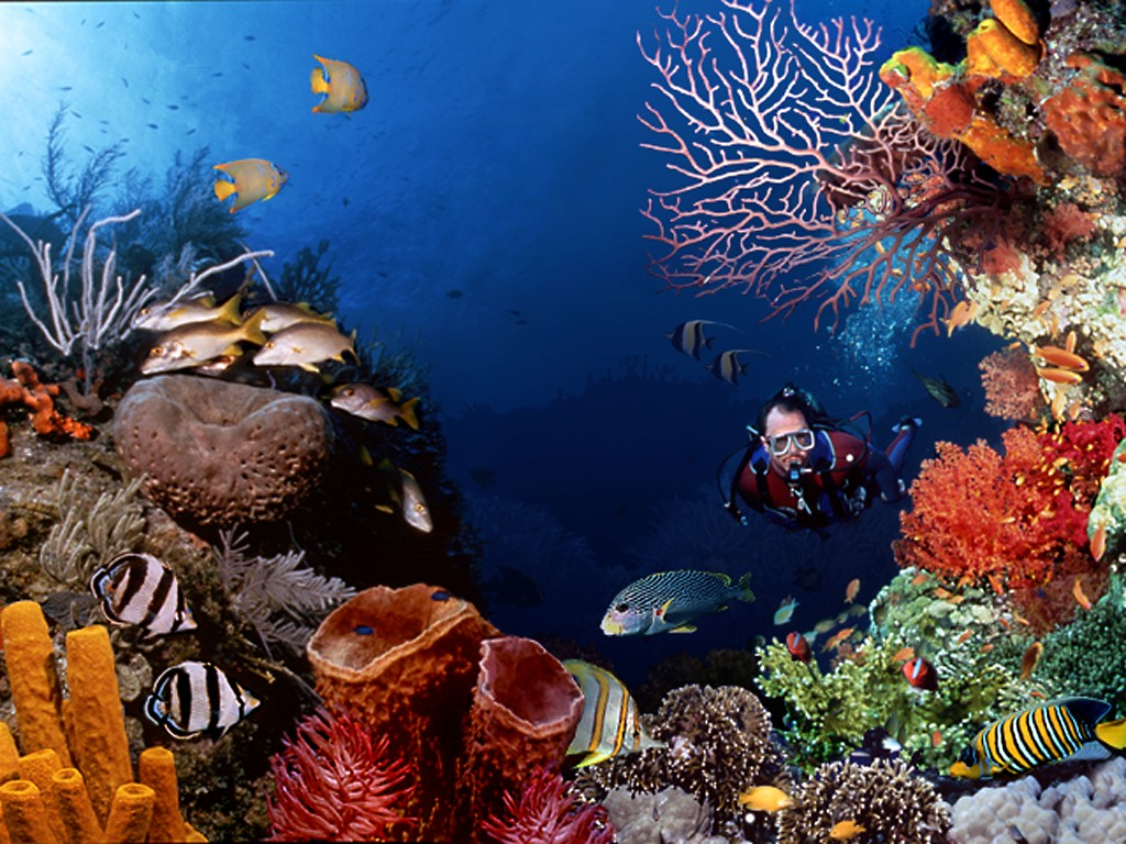 47 ] Scuba Diving Wallpapers On WallpaperSafari