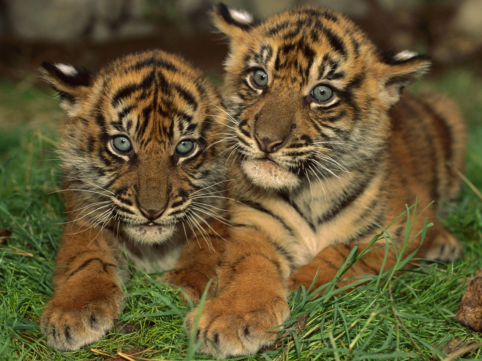 Cute Baby Animals   Cute Baby Animals Desktop Backgrounds 1600x1200
