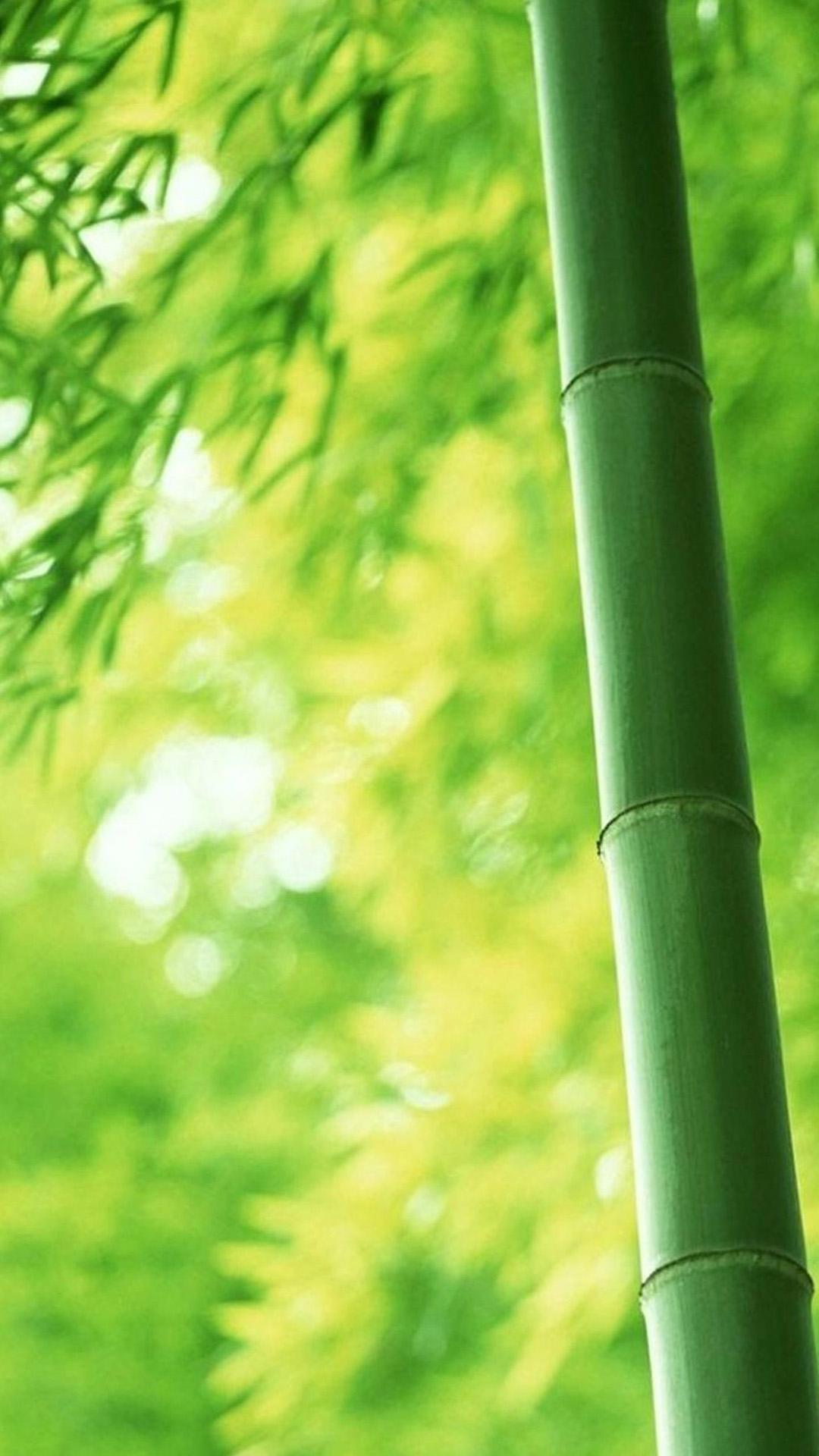 Green Bamboo Wallpaper Wallpapersafari