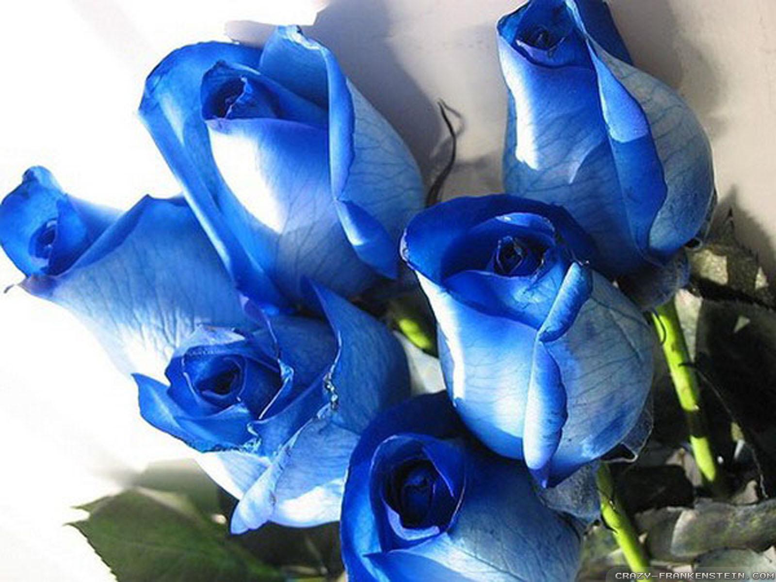 Открытка с синими розами 78