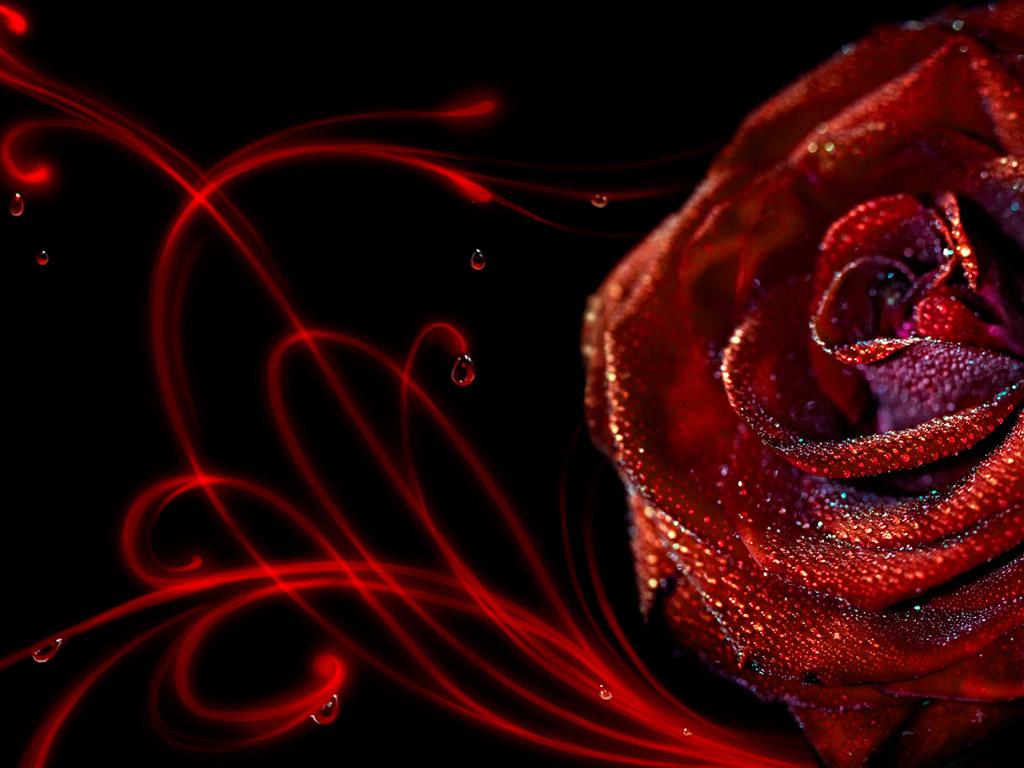 Hd red rose wallpaper wallpapersafari - Black and red rose wallpaper ...