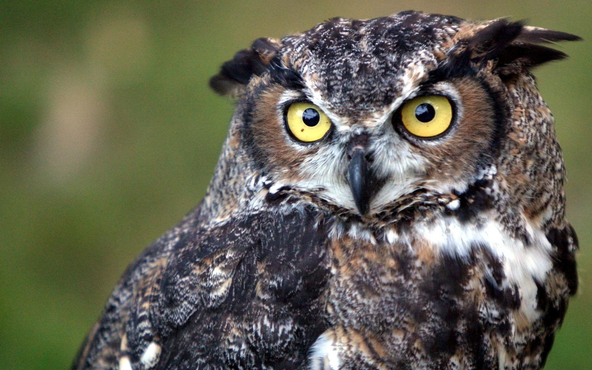 Cool Owl Wallpapers Wallpapersafari