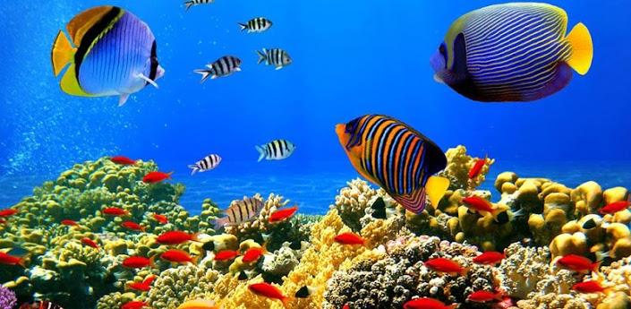 3D Aquarium Live Wallpaper 705x345