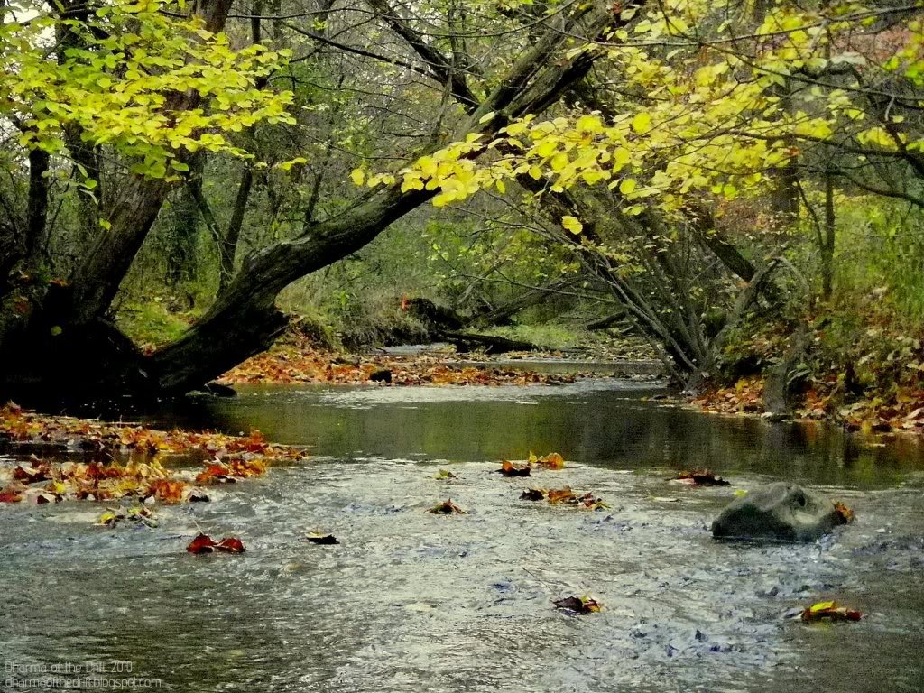 Trout Stream Wallpaper Pennsylvania trout stream 1024x768