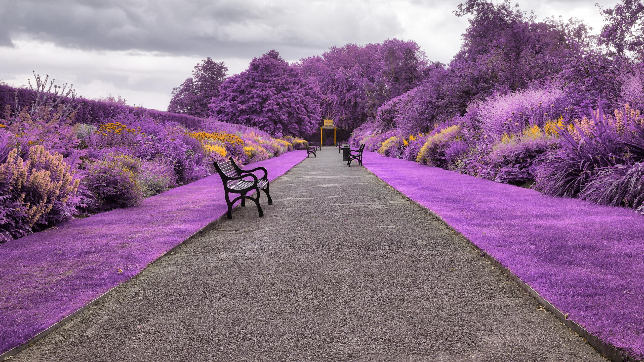 2560x1440 Belfast Botanic Gardens in Northern Ireland 1440P 2560x1440
