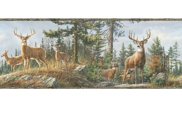Lodge Hunting Wallpaper Border White Tail Crest Buck Deer Wall Border 600x384