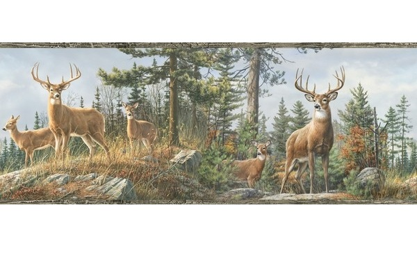 Lodge Hunting Wallpaper Border White Tail Crest Buck Deer Wall Border 600x384