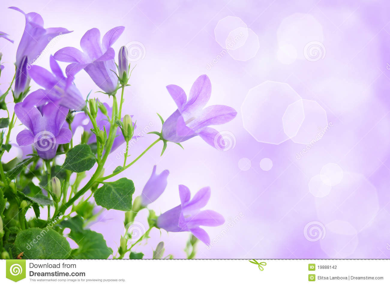 Pretty Purple Flowers White Background Pretty Purple Backgrou...