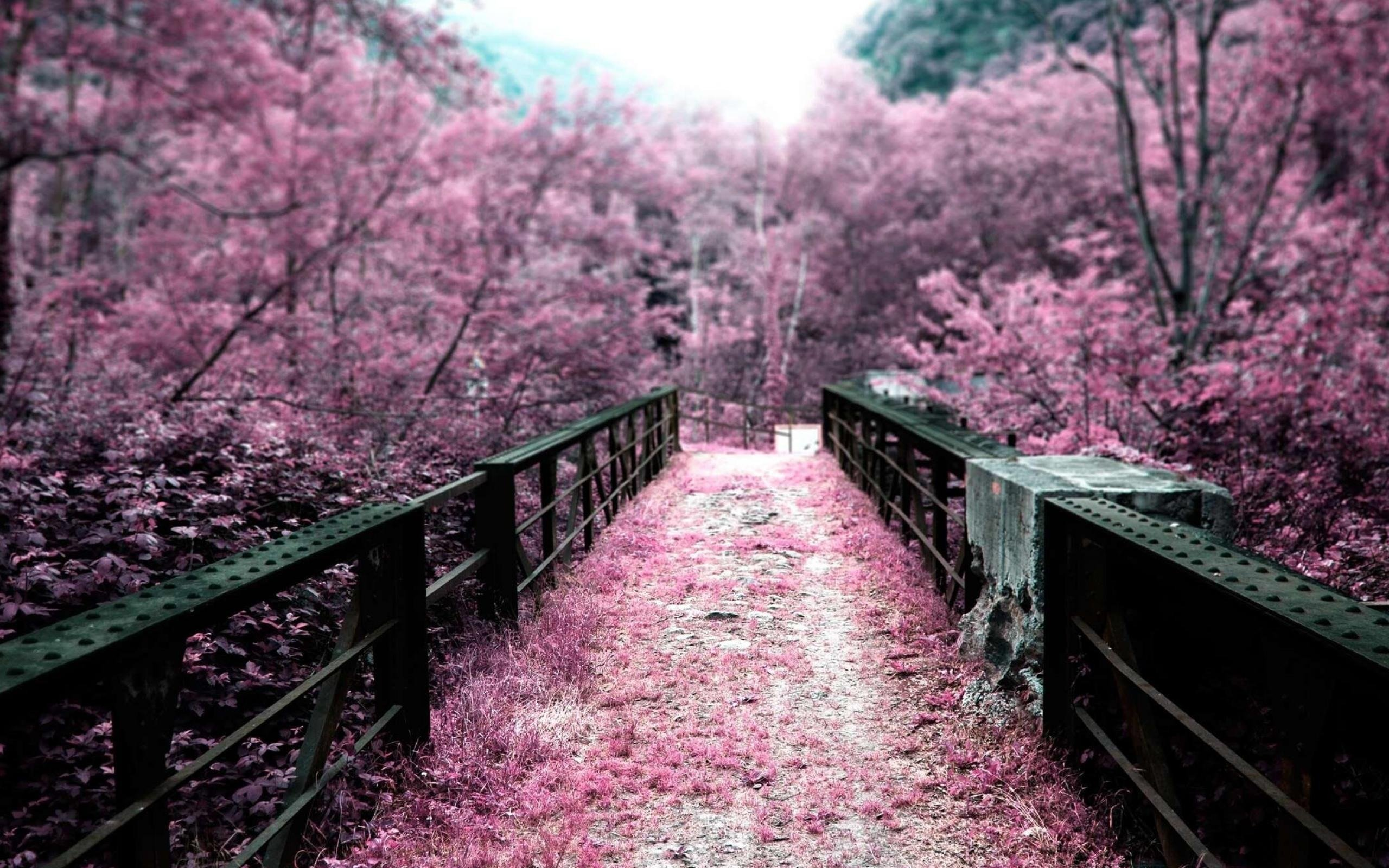 pink nature scenery wallpapers walljpegcom 2560x1600