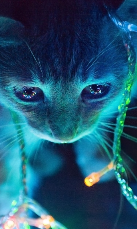Galaxy cat wallpaper wallpapersafari - Galaxy christmas wallpaper ...
