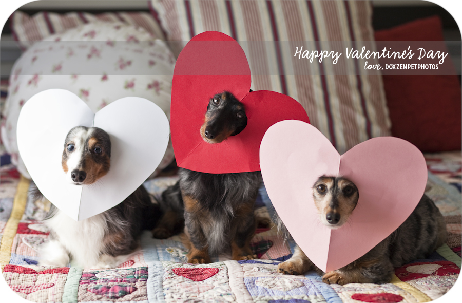 Valentines Day Treats For Dogs And Cats