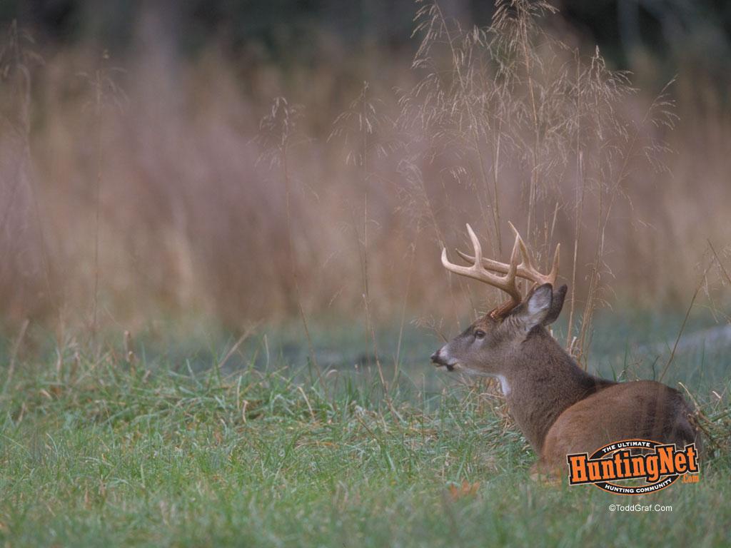 Deer Hunting 1024x768