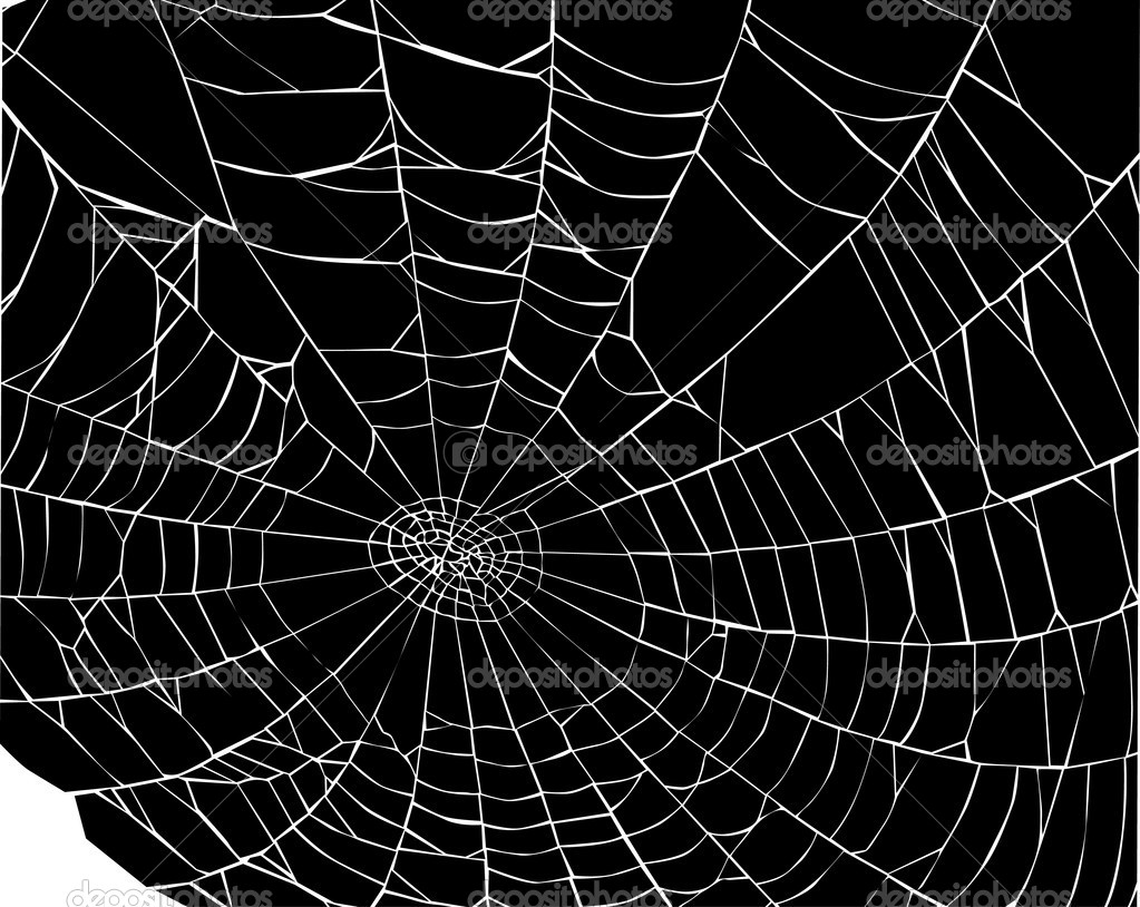 Facts Funny Stuff about Animals Nature Spider Web Background Black 1023x814